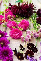 Flower stems ready to be arranged in shades of cerise, magenta and dark red, plants include: Dahlia, Asters, Chocolate Cosmos, Astrantia and Zinnia