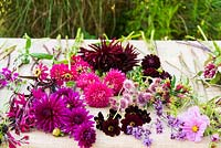 Flower stems ready to be arranged in shades of cerise, magenta and dark red including: Dahlia, Aster, Chocolate cosmos, Astrantia and Zinnia
