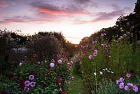 Dawn breaking over a field of flowers grown for cutting