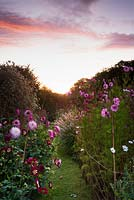 Dawn breaking over the field of flowers grown for cutting