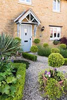 Contemporary cottage front garden with clipped box and clipped standard Ilex crenata