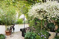 Small back garden with standard Salix integra 'Hakuro-nishiki', climber clad walls with decorative metal birds and finial.