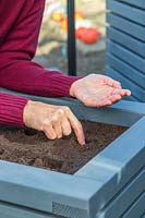 Using a finger to make indents in compost prior to sowing Lettuce seeds