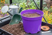 Pot with compost, seeds and label - ready to sow Chives to overwinter in greenhouse