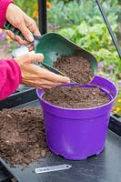 Using a scoop to add a thin layer of compost to cover newly-sown Chives