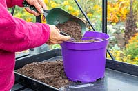 Woman using a scoop to add a thin layer of compost to cover the newly-sown Chive seeds