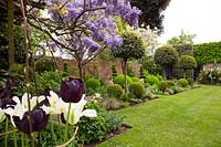 View through Wisteria and Tulipa - Tulip to bed rows of topiary, with Laurus nobilis - Bay - lollipops, , Buxus sempervirens - Box - balls and spirals