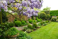 Small garden with formal layout, beds of topiary either side of straight path. Laurus nobilis - Bay - lollipop topiary, Wisteria, Buxus sempervirens - Box - balls and spirals.
