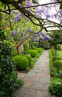 View under Wisteria and along straight path, beds on either side filled with topiary: Laurus nobilis - Bay - lollipop trees and Buxus sempervirens - Box -balls and spirals