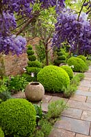 View through Wisteria to small beds between path and brick wall planted with topiary, Buxus sempervirens - Box - balls and spirals, plus empty pots