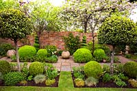 Small beds cut out of lawn planted with Laurus nobilis - Bay - lollipop trees, Buxus sempervirens - Box - balls and mixed perennials. Paved paths with empty pots separate two more small beds with Box balls and spirals with brick wall backdrop
