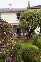 View over topiary, Clematis montana and perennials to back of old house with specimen trees in lawn