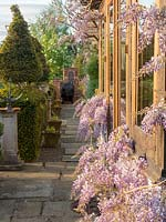Wisteria in flower on conservatory, view down paved path lined with containers