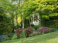 Shaded shrub garden with a large Acer palmate.