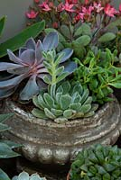 Assorted succulent plants in old  stone pot - RHS Chelsea Flower Show