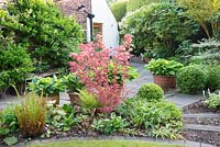 Paths and borders surrounding Brooke house in spring with Acer palmatum, potted Hostas, ferns and Buxus spheres