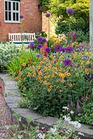Geum 'Totally Tangerine', avens with purple alliums, centaureas and hardy geraniums, cottage garden raised bed, May.