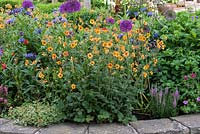 Raised cottage garden bed with Geum 'Totally Tangerine', avens, purple alliums, centaureas and hardy geraniums.
