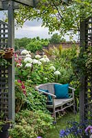 Roof terrace, view through trellis to  seating area with a bench in front of 'Annabelle' hydrangea. July.