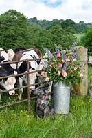 A milk churn filled with the flowers and Barry the dog and a field of cows. Quirky Flowers.