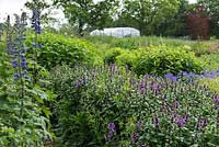 Meadow with rows of annual and perennial cut flowers
