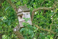 Nesting box in fruit tree in orchard.