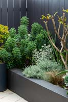 Detail of a raised garden bed with a mixed planting of grey, silver foliage plants and a small Frangipani tree that is putting on new growth.