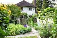 Vegetable patch divided by paved paths and picket fence, bed with Potato plants, nearby Helianthus annuus - Sunflower and Inula with house beyond
