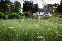 View across meadow full of Anthriscus sylvestris - Cow Parsley and Centaurea nigra - Common Knapweed to a house and trees