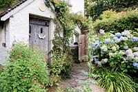 Traditional wooden door in old house framed by red Salvia, rough paved path leads round back of house with blue Hydrangeas and orange Hemerocallis nearby