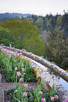 The Parterre at Hotel Endsleigh with perimeter water channel framing beds of pink tulips underplanted with violas in spring