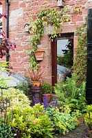 Pots of phormium and box surrounded by self seeded ferns and Alchemilla mollis on a terrace at the back of Ivy House, Cumwhitton in July