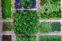 Year of Green Action Garden - contemporary green wall with herbs, strawberry plants and Lobelia