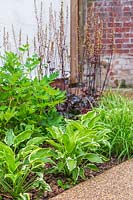 Newly planted border with Carex 'Ice Queen', Hosta 'So Sweet', Dicentra spectabilis 'Alba' and Heuchera 'Prince'