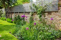 A borders of alliums and cow parsley in a walled city garden with raised wooden screen for extra privacy.