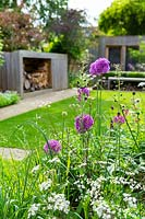 A contemporary city garden with a border with alliums, purple mullein and cow parsley in front of a lawn, shed and wooden summer house.