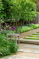 A small wooden stool in a contemporary garden. A raised lawn and path beside pleached hornbeams underplanted with sweet woodruff.