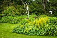 Lysimachia punctata with Alchemilla mollis, Sambucus racemosa in island bed with bird perch and feeders