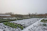 View of the walled kitchen garden in snow, with box hedging and Chard in foreground