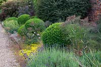 Foeniculum and Lavandula with Buxus spheres in summer border.
