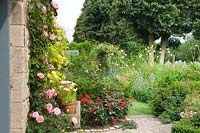 Rose 'Gertrude Jekyll' pink climbing rose on stone house in cottage garden