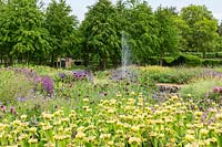 The Perennial Meadow at Scampston Hall Walled Garden, North Yorkshire, UK. Planting includes Phlomis russeliana, Knautia macedonica, Geranium 'Brookside'.
