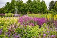 The Perennial Meadow at Scampston Hall Walled Garden, North Yorkshire, UK.  Planting includes Salvia x sylvestris 'Amethyst', Geranium 'Brookside', and Thermopsis caroliniana.