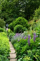 Lupinus 'Governor Blue' and Alchemilla mollis in borders either side of path leading to angel sculpture.