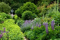 Lupinus 'Governor Blue' and Alchemilla mollis in borders either side of path leading to angel sculpture