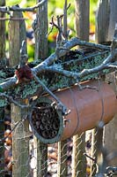 Bee hotel, pipe filled with bamboo sticks to make a home for the bees, attached to fence