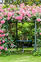 Rosa 'Cocktail' covering metal pergola, with table and chairs beneath.