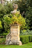 Old stone carved plinth and urn with Rosa - Rose - trained around