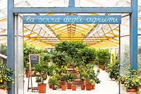 Entrance to Citrus nursery with potted plants displayed undercover