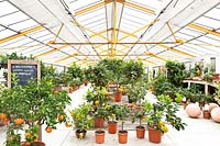 Citrus nursery with potted plants on display undercover